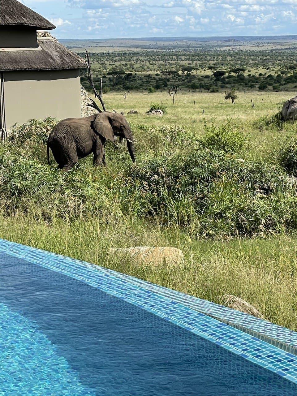 Lodging in Serengeti
